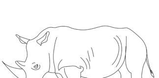 Nosorożec biały kolorowanka do drukowania